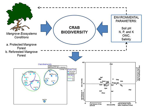 Crab biodiversity under different management schemes of mangrove ecosystems