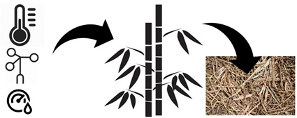 Ecology of litterfall production of giant bamboo Dendrocalamus asper in a watershed area