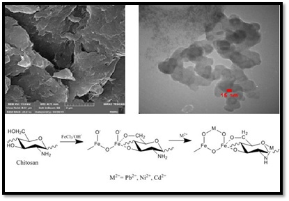 Synthesized chitosan/ iron oxide nanocomposite and shrimp shell in removal of nickel, cadmium and lead from aqueous solution