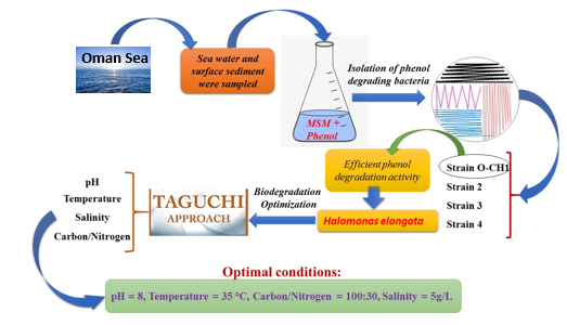 Phenol biodegradation by bacterial strain O-CH1 isolated from seashore