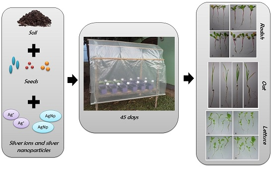 Impact of silver ions and silver nanoparticles on the plant growth and soil microorganisms