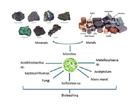 A delve into the exploration of potential bacterial extremophiles used for metal recovery