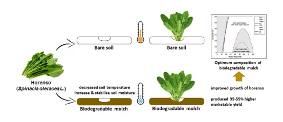 Biodegradable mulch as microclimate modification effort for improving the growth of horenso; Spinacia oleracea L.