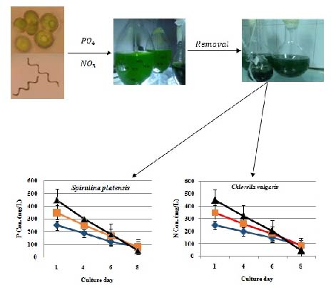 Removal of nitrate and phosphate from aqueous solutions by microalgae: An experimental study