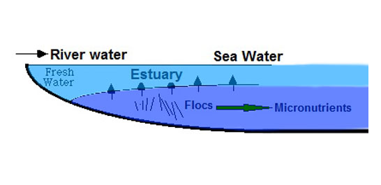 Role of estuarine natural processes in removal of trace metals under emergency situations