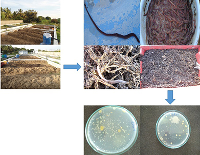 An integrated approach of composting methodologies for solid waste management