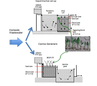 Pollutant removal by Canna Generalis in tropical constructed wetlands for domestic wastewater treatment