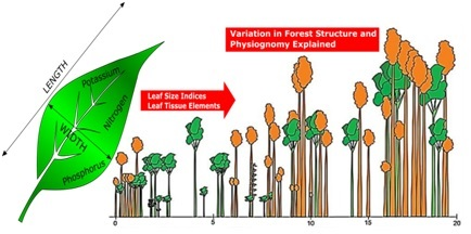 Leaf size indices and structure of the peat swamp forest