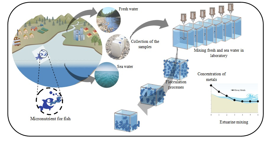Role of estuarine natural flocculation process in removal of Cu, Mn, Ni, Pb and Zn